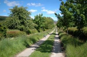IMPACTED Guisachan Farm Track